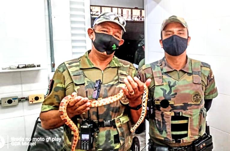 Cobra exótica nativa da América do Norte é resgatada na região da Enseada